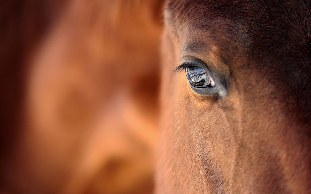 Equine Therapy – A Compassionate Heart