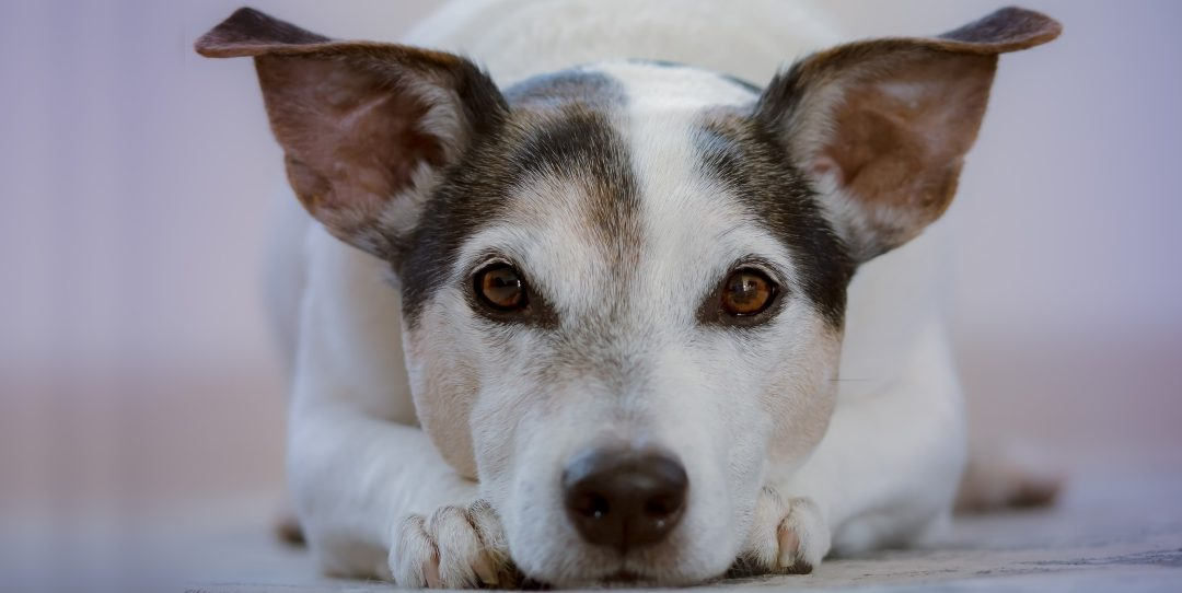 Tips For Successful Animal Communication
