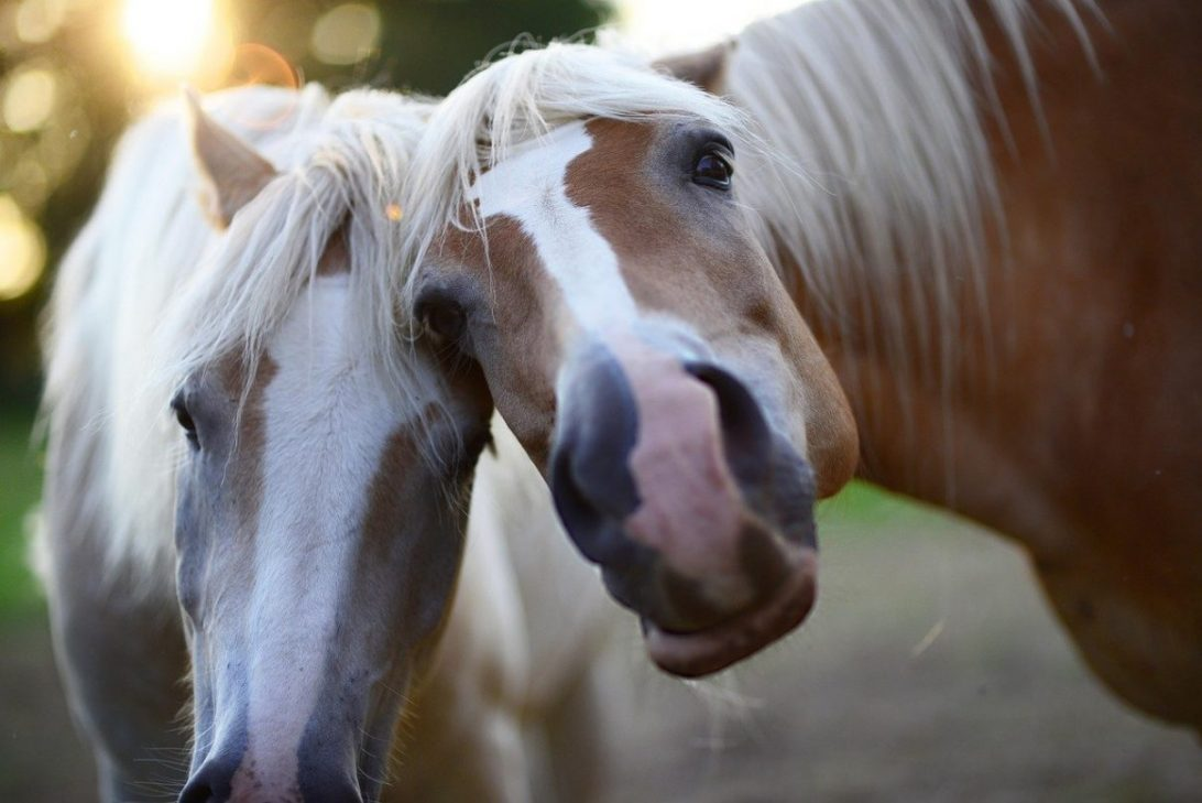 Animal Communication Clinics - Horse Special